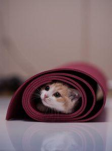 cat in mat